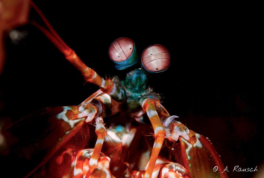 Krabbe | Alex Rausch