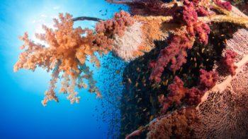 Permalink auf:Unterwasser Blitzen – Übersicht