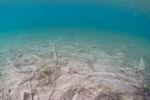 rx100-underwater-05