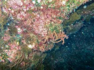 TG-5 Unterwassermodus