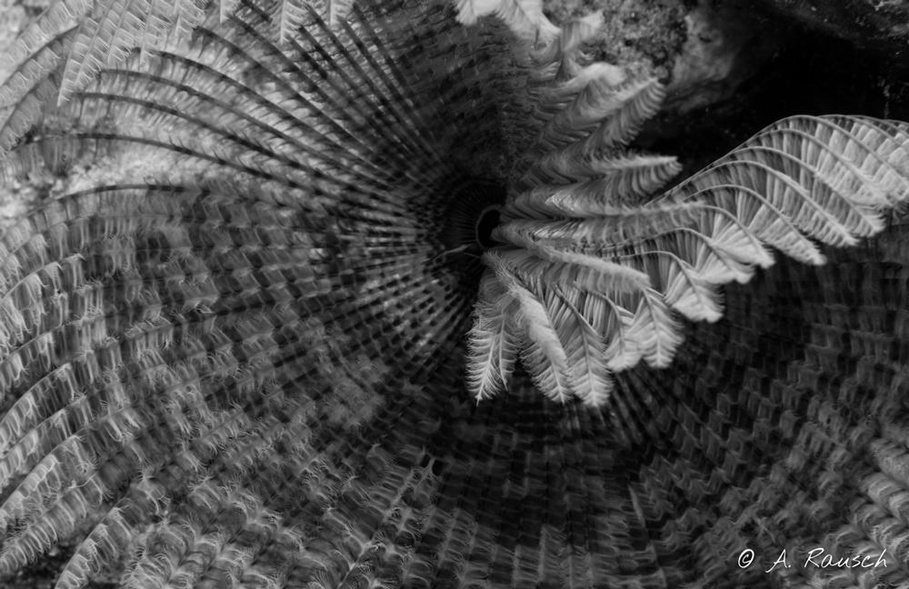 Makro einer Weichkoralle