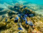 Fischschwarm GoPro Hero 3+ Black