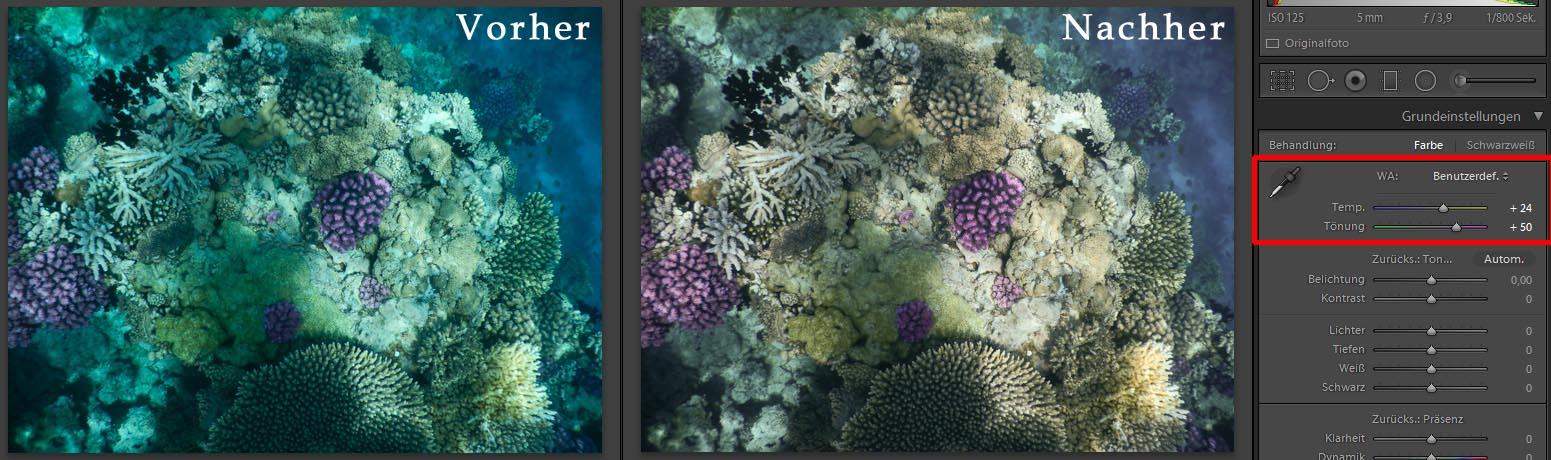 Weißabgleich Blauwasser Bildbearbeitung Unterwasserfotografie