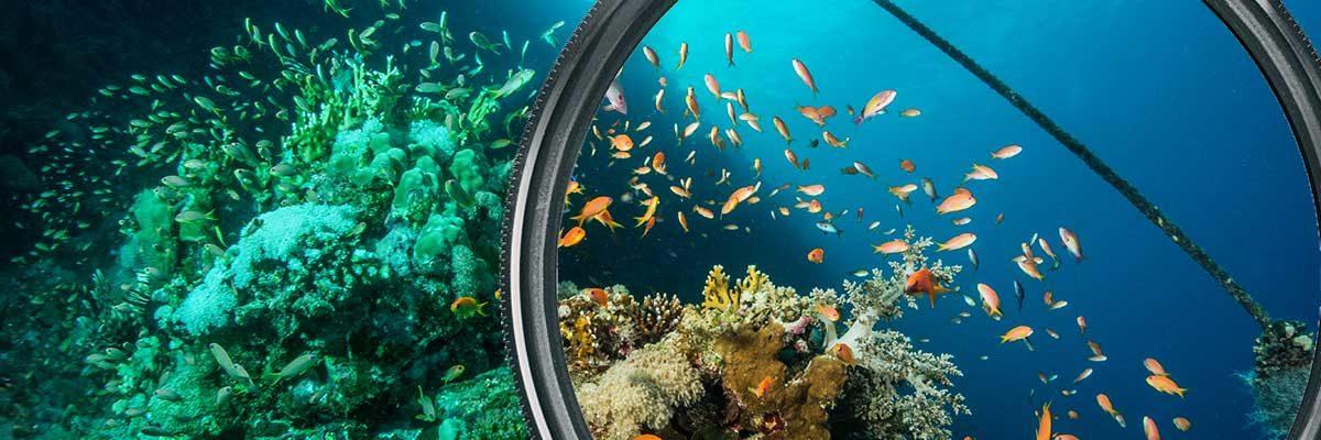 Weiterlesen: Rotfilter in der Unterwasserfotgrafie