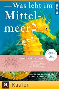 Was lebt im Mittelmeer