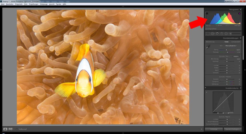 Bildbearbeitung Unterwasserfotografie - Auswertung des Histogramms
