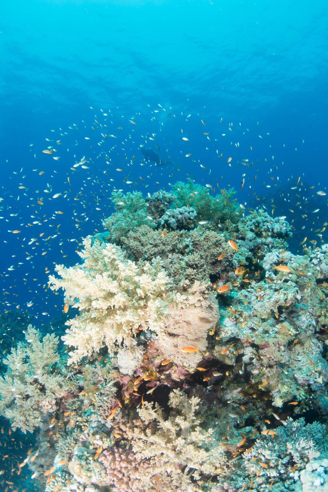 Unterwasserfotografie Bildbearbeitung Erg Monika Riff