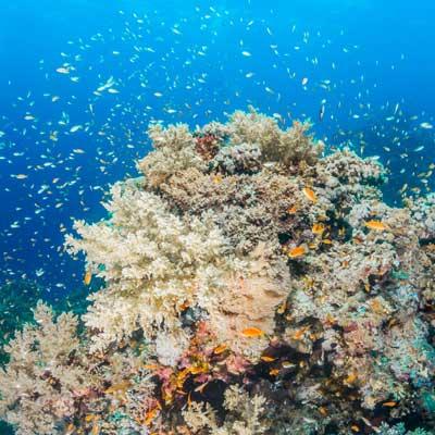 Bildbearbeitung Riff Tauchen Unterwasserfotografie