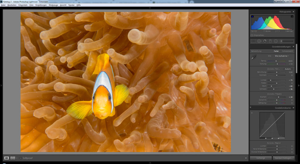 Bildbearbeitung Lightroom Photoshop Unterwasserfotografie Beispiel Anemonenfisch Tauchen Ägypten