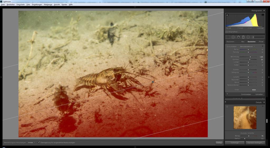 Bildbearbeitung Unterwasserfotografie Tauchen - Süßwasser Kamberkrebs mit Lightroom