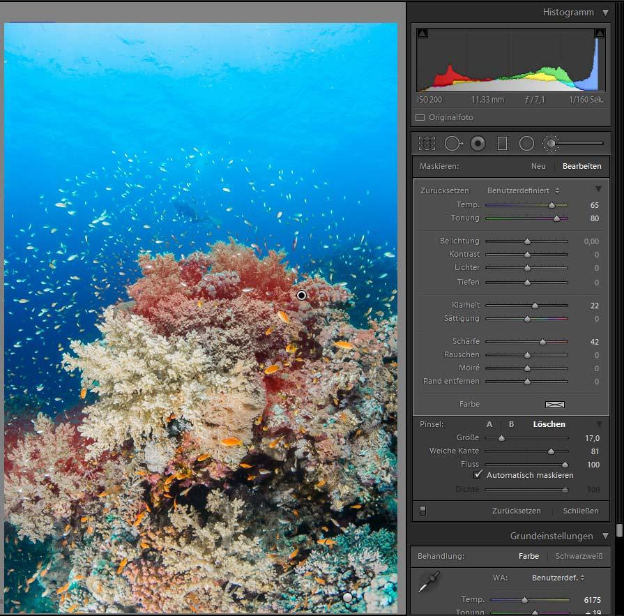 Lightroom Bildbearbeitung UW-Foto Türkis Farben Riff Korrektur