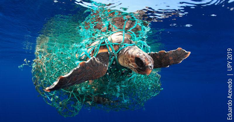 Siegerbild Underwaterphotographer od the year 2019 Eduardo Acevedo Schildkröte gefangen im Netz