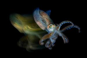 Octopus Macro mit scharzem Hintergrund und langzeit-Belichtungs-Streifen bunt